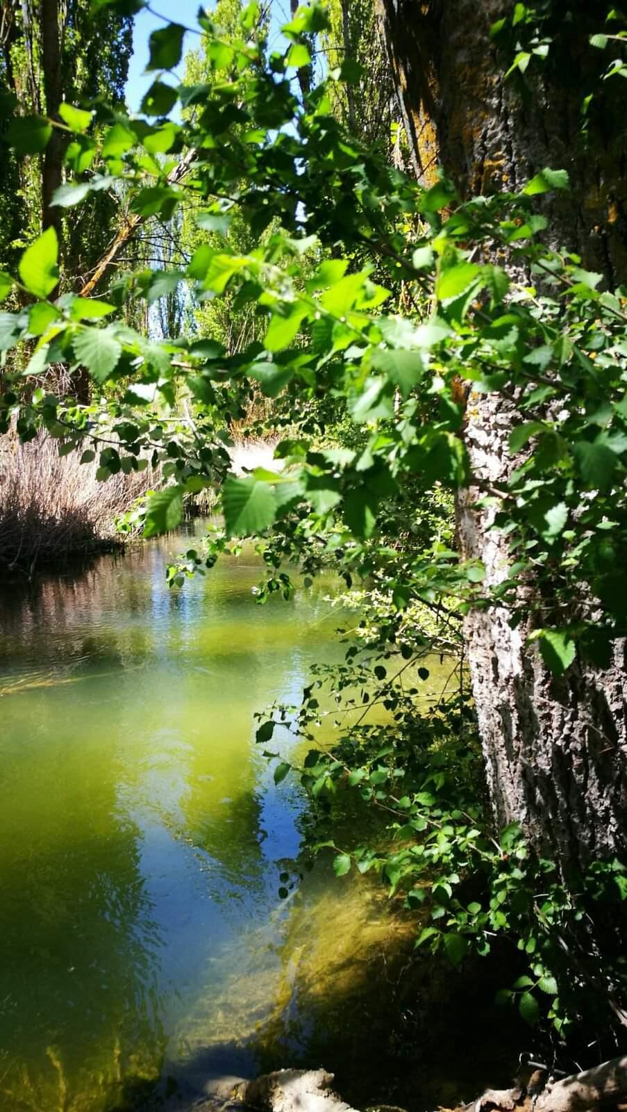 Río Gigüela
